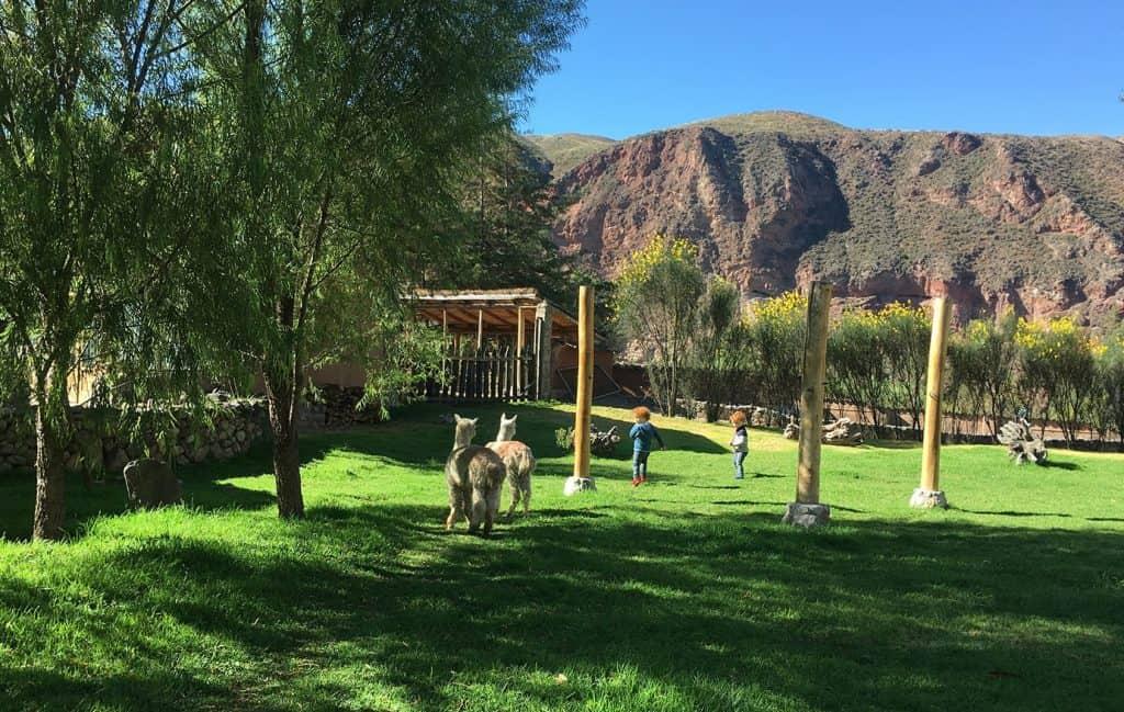 Tierra Viva Valle Sagrado hotel: the beautiful gardens where alpaca go around freely